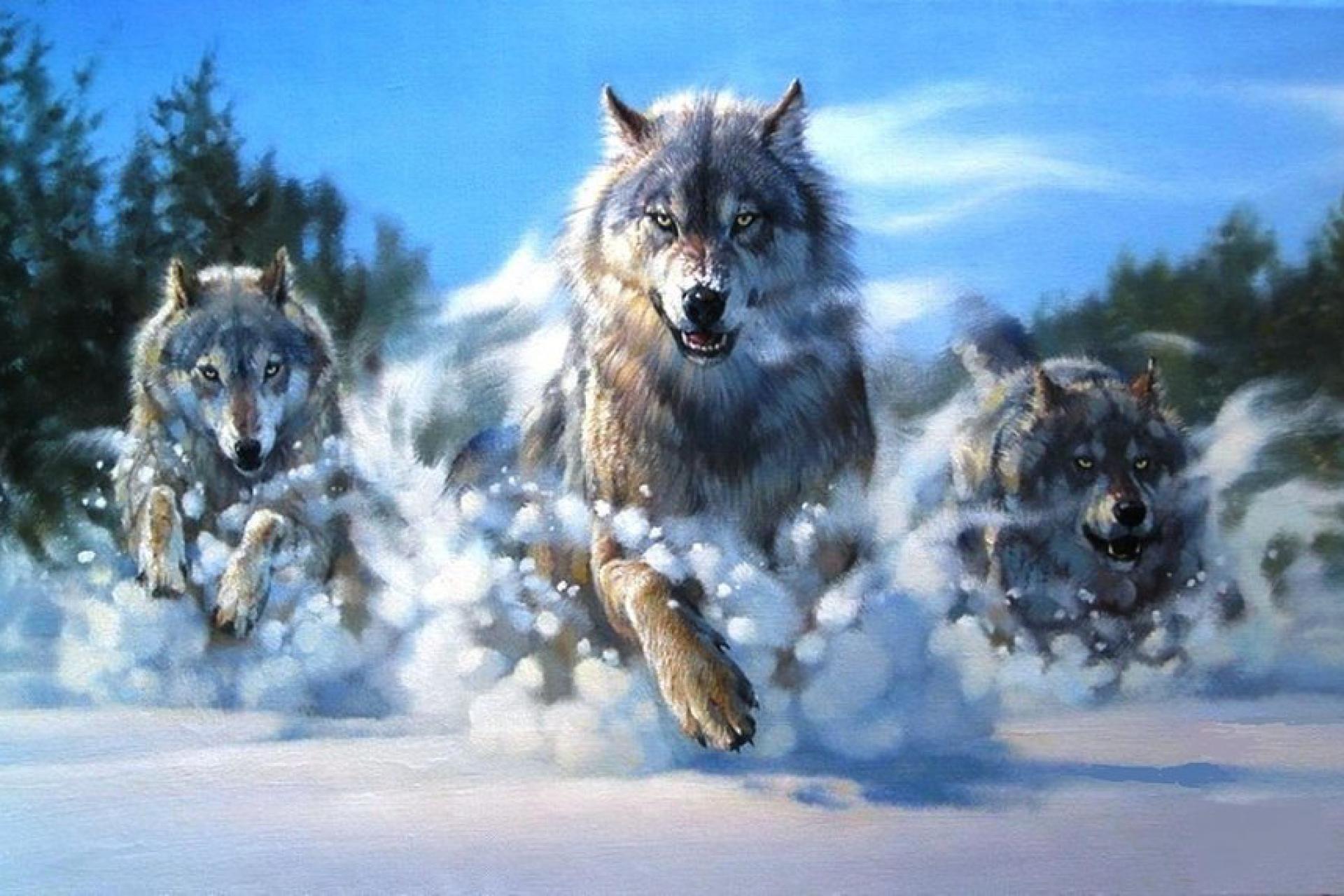 Nằm mơ thấy chó sói đánh con gì?