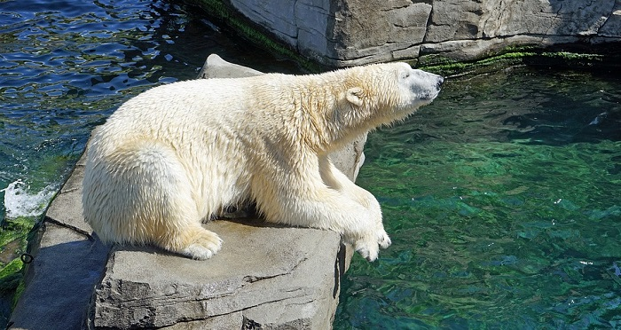 Mơ thấy gấu mang điềm báo gì?