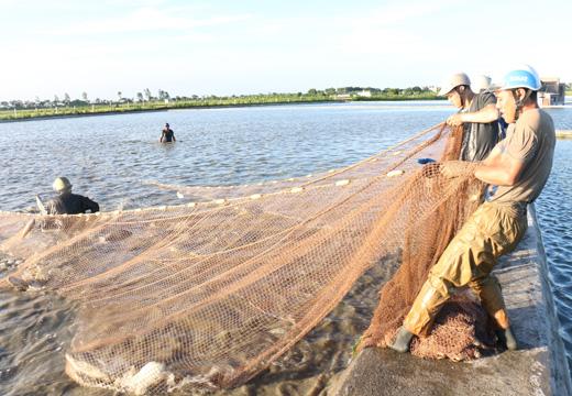 Ngủ mơ thấy kéo lưới bắt cá đánh con gì dễ trúng?