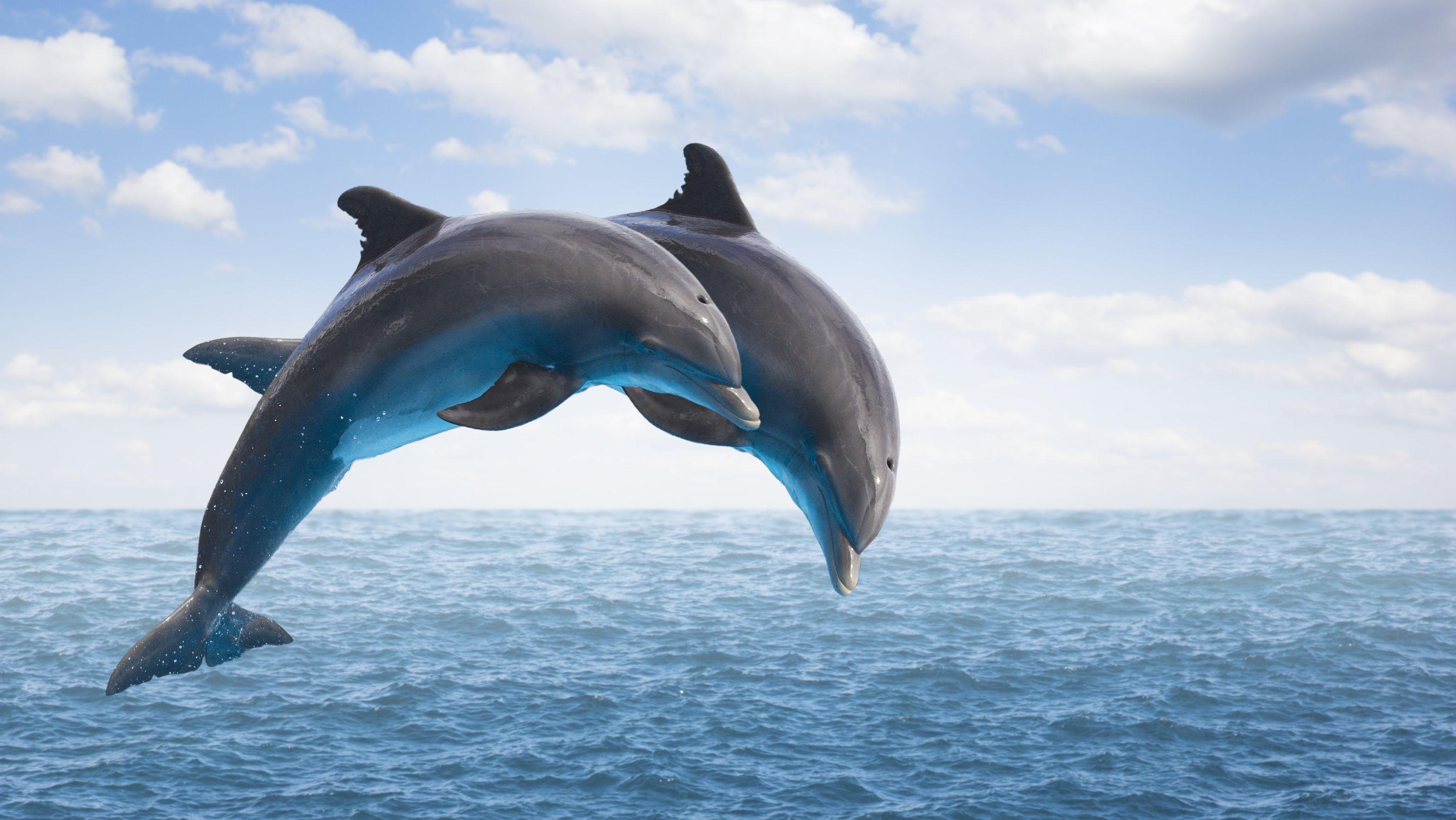 Ý nghĩa con số tài lộc khi mơ thấy con cá heo