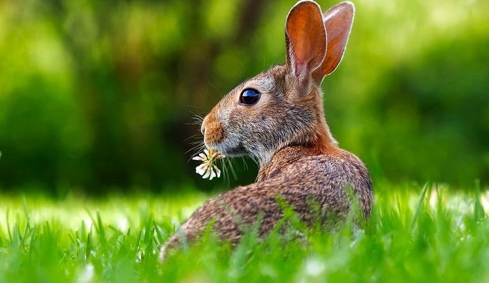 Mơ thấy thỏ là điềm báo gì? Thông điệp xổ số khi mơ thấy thỏ