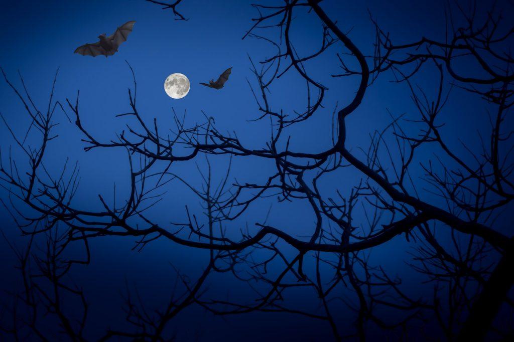 Ý nghĩa giấc mơ thấy những con dơi trong bóng tối
