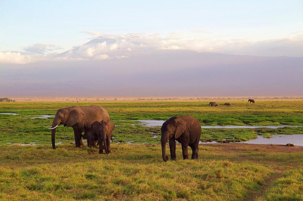 Những con voi trong mơ có ý nghĩa gì? Thông điệp từ voi