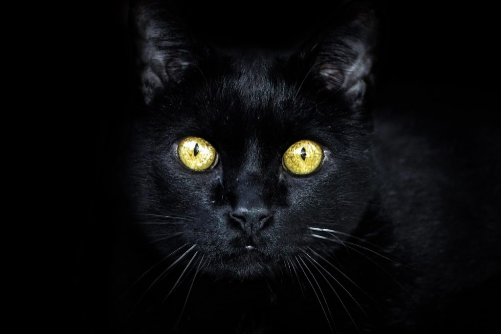 Mơ thấy con mèo đen là điềm báo gì? Nên làm gì khi mơ thấy mèo?