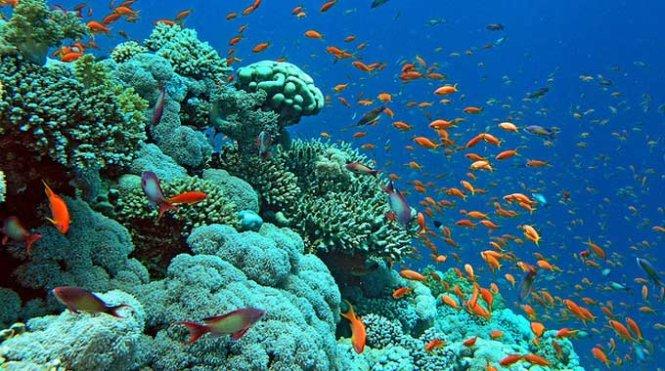 Mơ thấy đại dương bao la là điềm báo may mắn hay xui xẻo?
