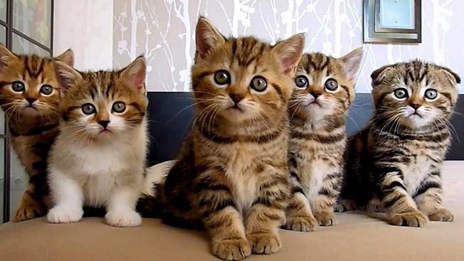 Nằm mơ thấy mèo đuổi theo có ý nghĩa gì? Điềm báo may hay xui?